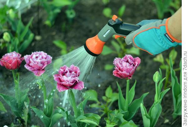 Сама садик я садила, сама буду поливать))))