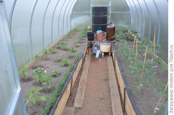 А здесь высажены позже - тоже пока плохо растут