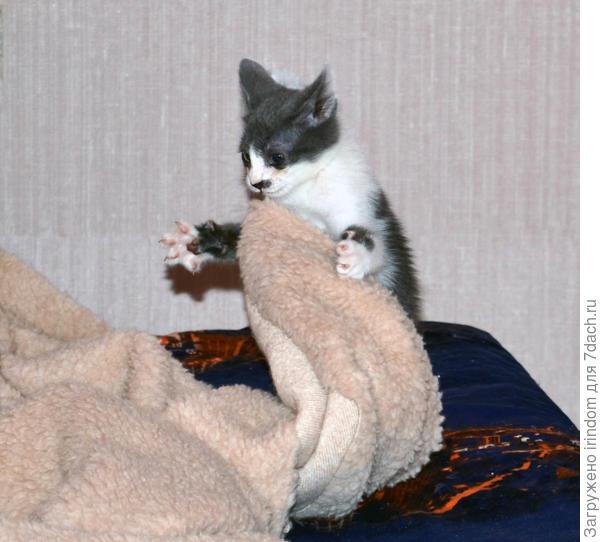 Перед сном еще и одеяло поправит)))