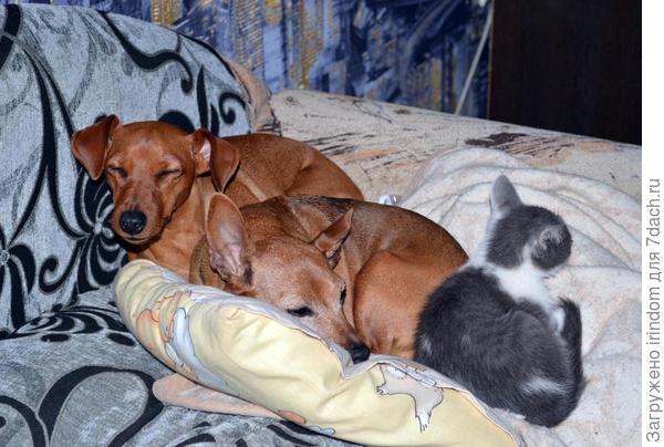 Зося, Марго и Пух