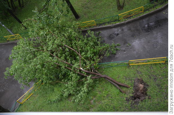 Несколько минут назад это дерево закрывало обзор из окон третьего этажа...