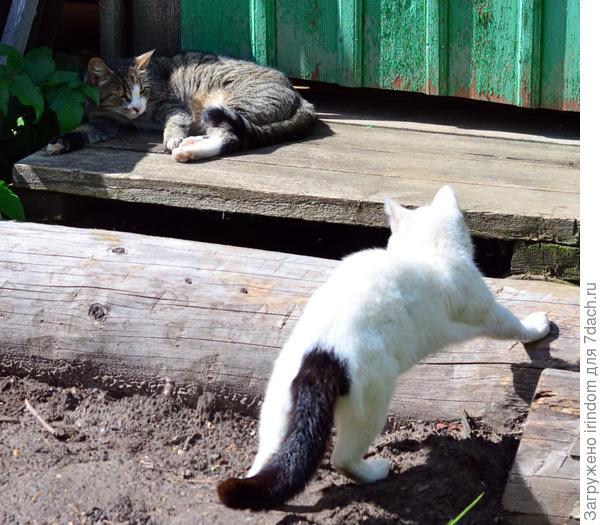 Видимо, когда всем раздавали хвосты, он где-то прогуливался и опоздал)))) Взял, что досталось.