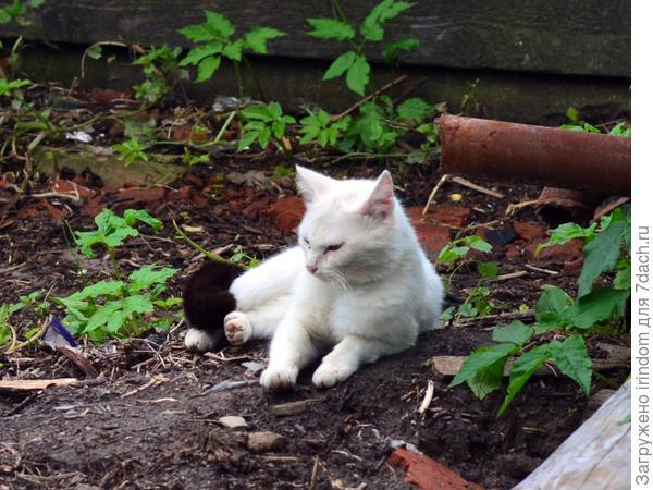 Вот такой симпатяга часто заходит в наш сад отдохнуть