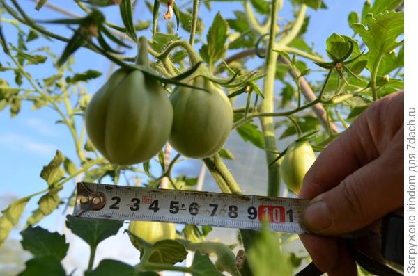 Плоды быстро растут