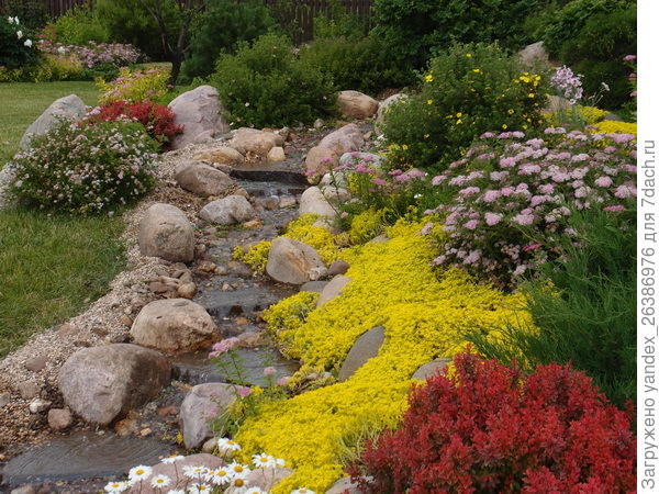 Очитки, цветут (большое желтое пятно). Можно ходить