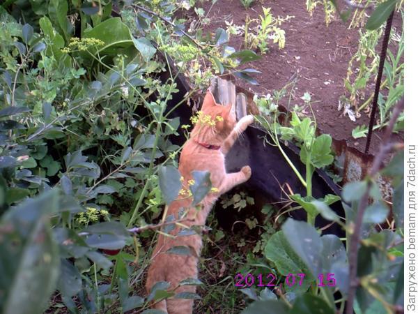 Там злая кошка.... Шипит... Знакомится не хочет !