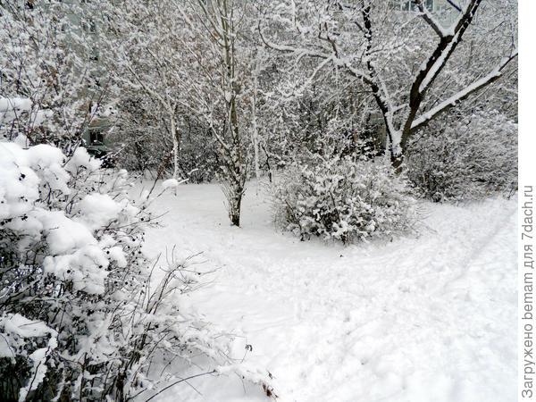 Мокрый снег налип на ветки. Красота !
