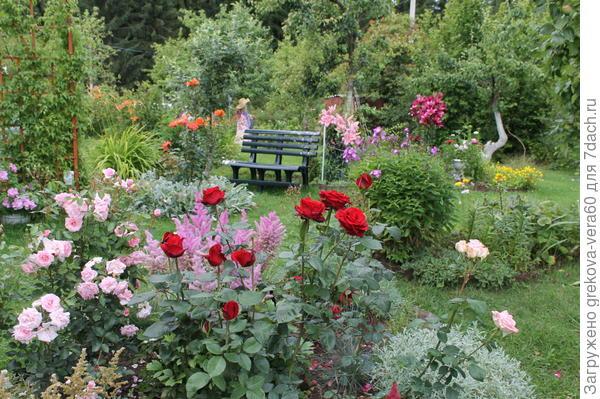 розарий и дальше вид на плодовый сад