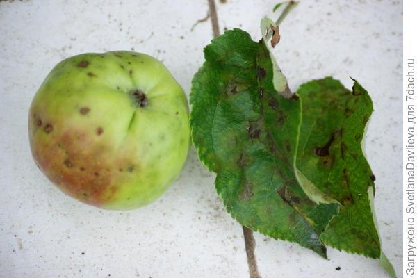 Больная яблоня
