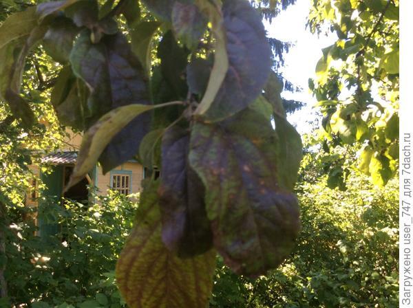Ветка с покрасневшими листьями