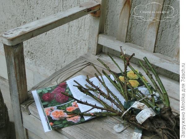 посылка с розами