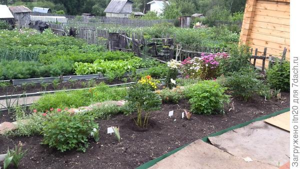 Единственная фотография, где видно зеленый базилик - за цветами, правее салата, к забору. Фото от 26.07.14.