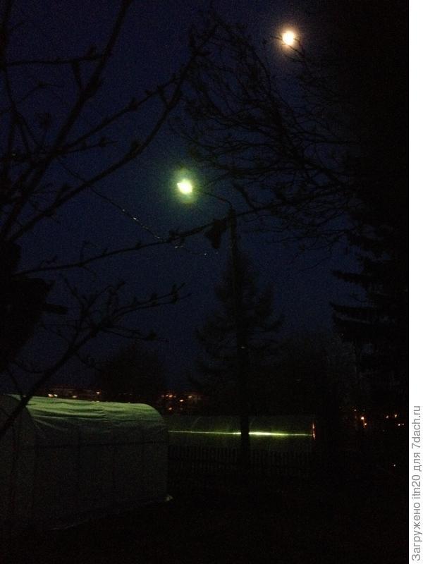 только фонарь и луна продолжали освещать сверху тепличку
