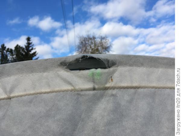 По верху, в торце теплицы с форточкой, обмотать узел не получилось, т.к. там по желобу должна проходит веревка, которой тент крепится к каркасу. К концу сезона – отверстие стало больше. Неприятно.