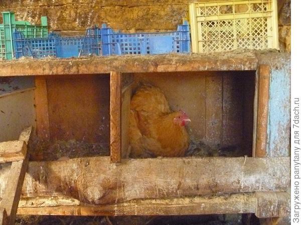 домик для яичек