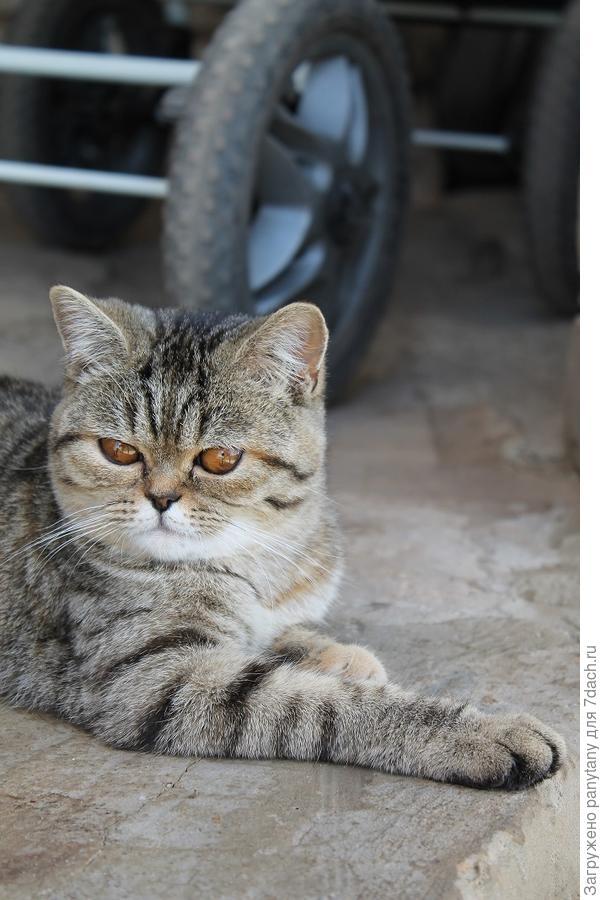 коты греются на стяжке