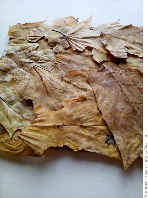 основание поделки из листьев