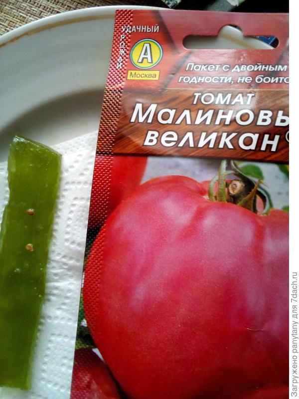 посев в лист алое