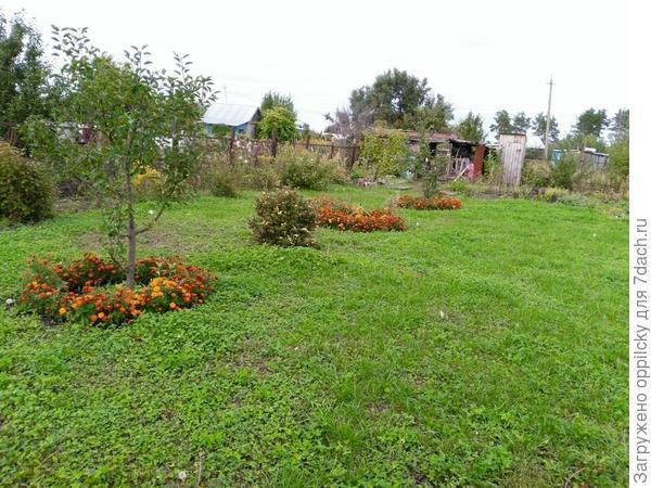 газон и бархатцы