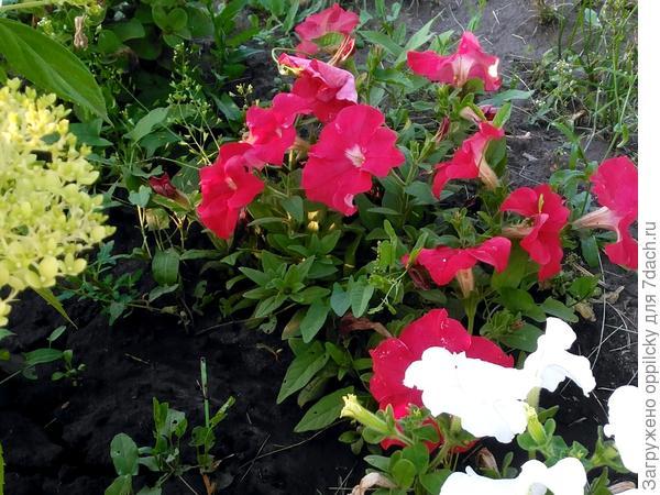 красная расцветка
