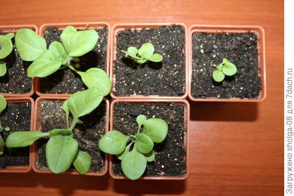 Самые мелкие растения