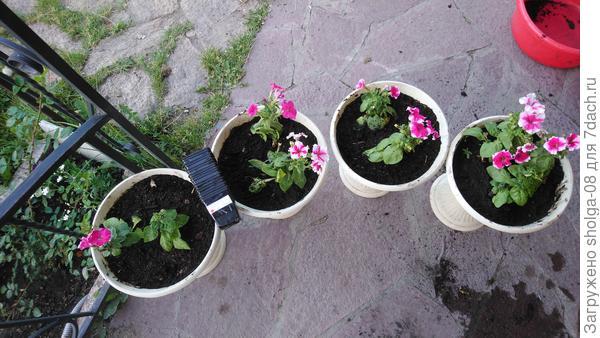 3 вазона по 2 садины. и 1 вазон в нем посажено 3 растения.