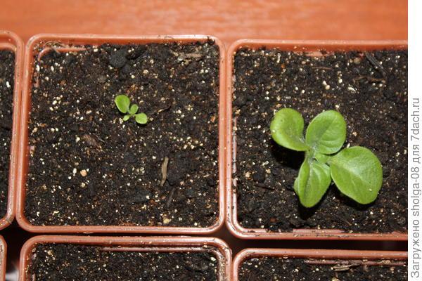 Растение из-под пленки