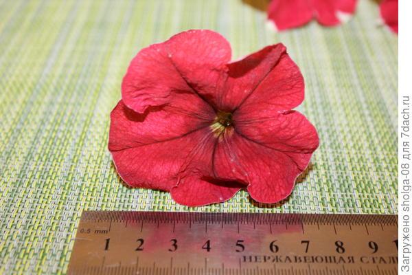 1 цветок размер