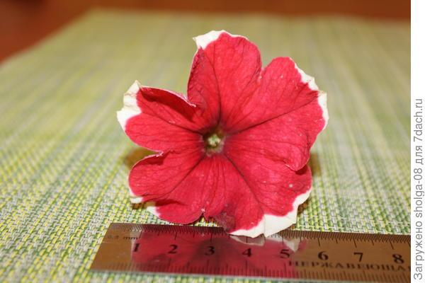 3 цветок размер -