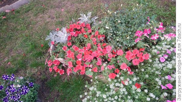 Цветы на сегодняшний осенний день