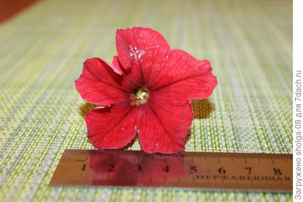 4 цветок размер -