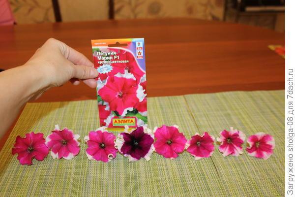 цветы с разных кустов, видны отличия