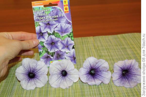 Заявленный вид цветка и натуральный. Практически не отличимо.
