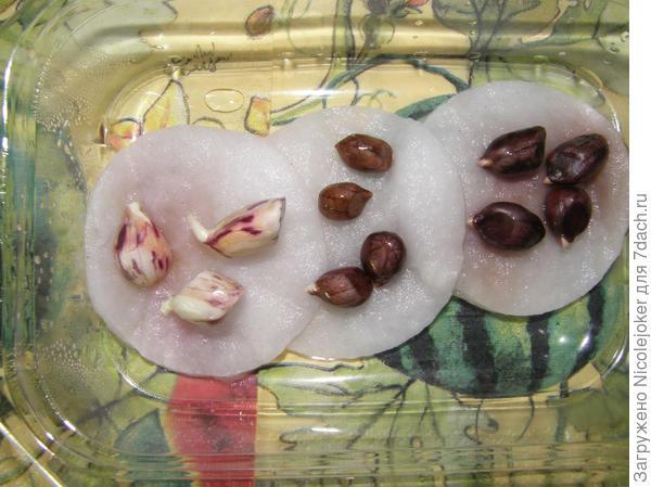 арахис - проращивание