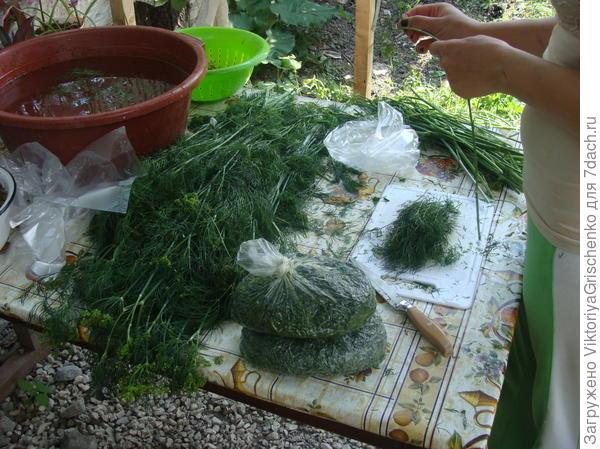 зелень с огорода