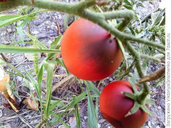 Аджика с помидорами и яблоками 7dach ru