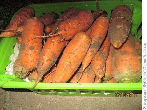 Морковь в кошелке