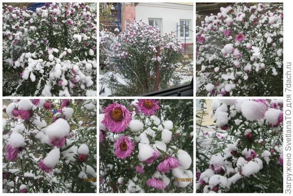 Как снег на голову!