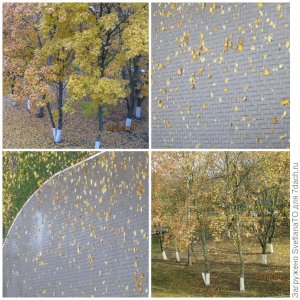 Осенний миг - так краток!