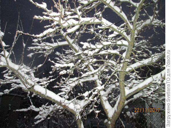 Зимние картинки в саду