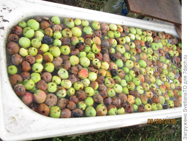 "Целая ванна ""яблочного компота"" для огорода"