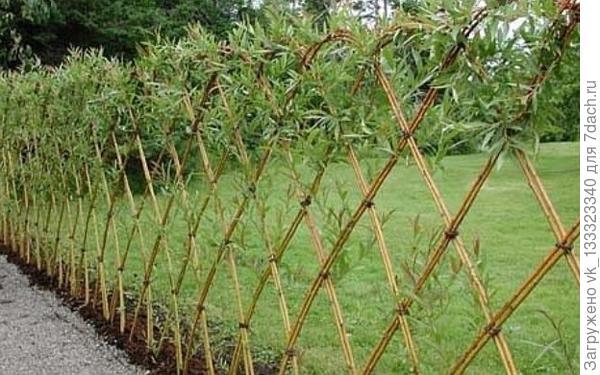 плетень из орешника