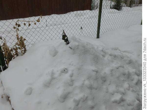 А пока зимуем под сугробами...