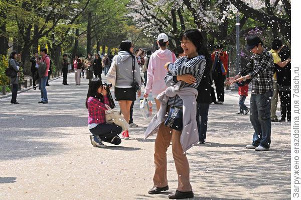 Ладно мы, неизбалованные красотой, но и все корейцы, любуются и берутся за фотокамеры.