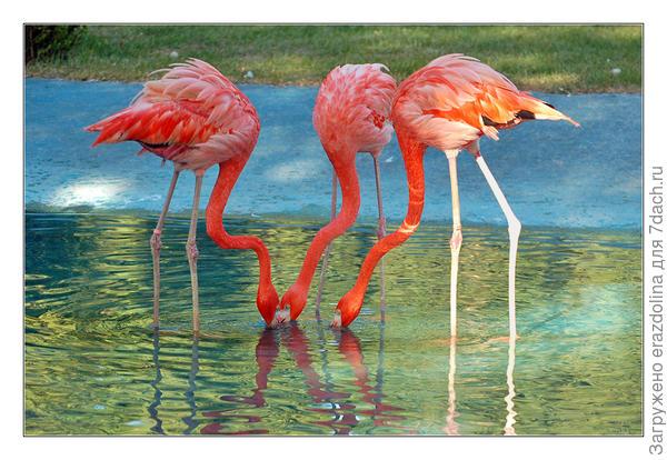 Фламинго шоу встречает вас, задавая настроение