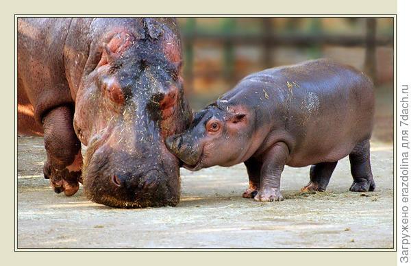 Сыновий поцелуй