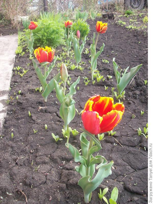 Первые цветочки. 2012.