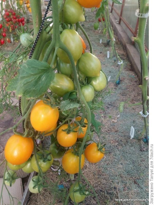 Цитрусовый сад.