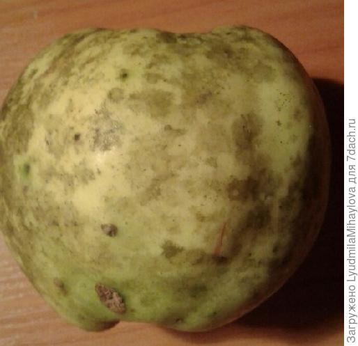 Поражённон яблоко
