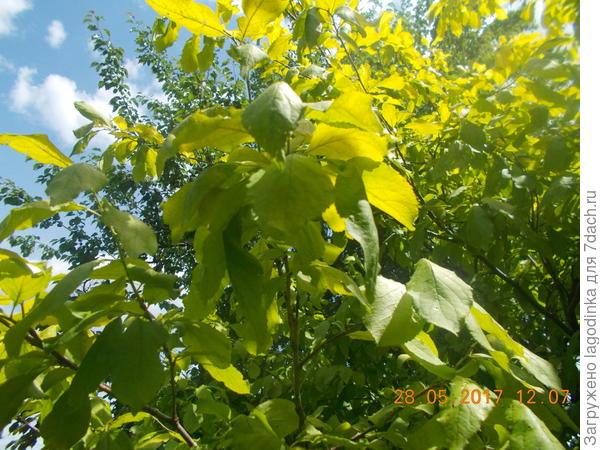 дерево,листья